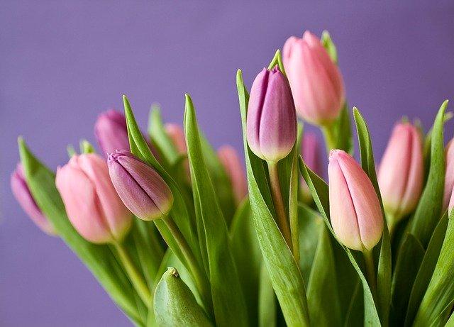 Бізнес на квітах – короткий огляд даної ідеї
