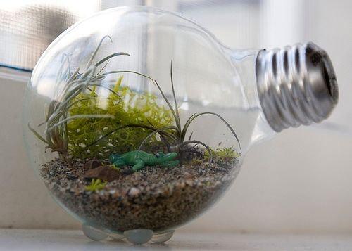 Бізнес ідея – створення флораріумів