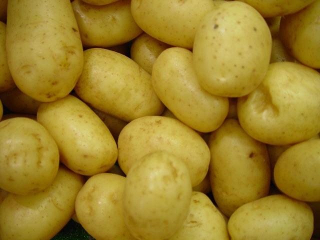 Бізнес ідея – вирощування картоплі в мішках