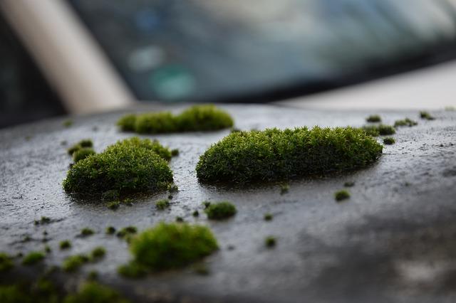 Бізнес ідея – вирощування стабілізованого моху