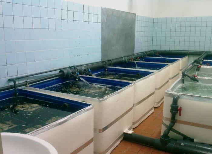 вирощування раків в басейнах