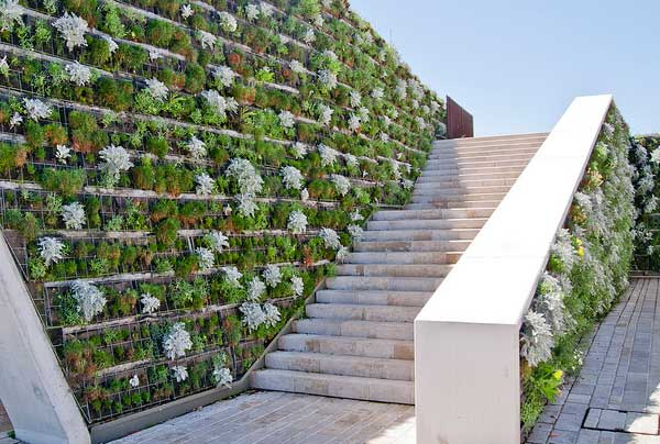 Бізнес ідея – вертикальне озеленення