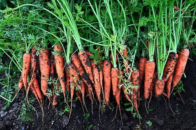 Вирощування моркви бізнес